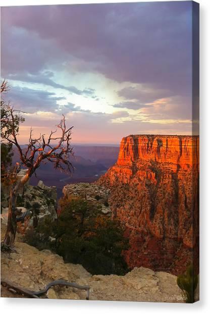 North Rim Canvas Print - Canyon Rim Tree by Heidi Smith