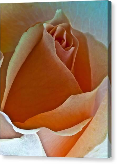 Canyon Rose Canvas Print