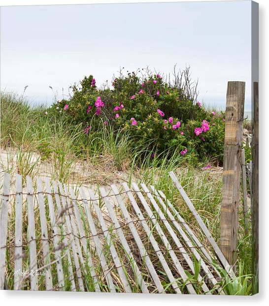 Cape Cod Beach Roses Canvas Print