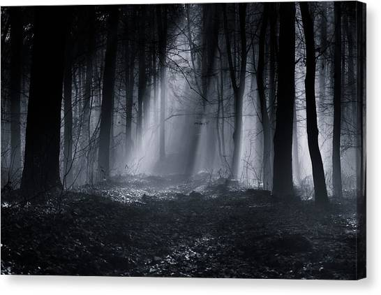Sun Rays Canvas Print - Capela Forest by Julien Oncete