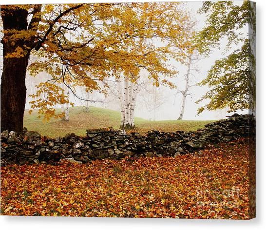 Caper Hill Birch Canvas Print