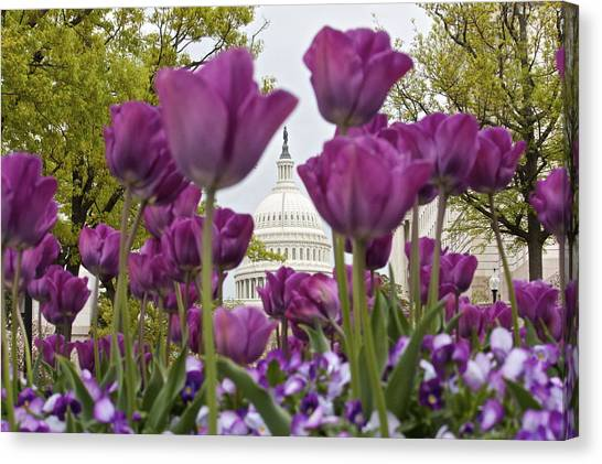 Capitol With Tulips Canvas Print