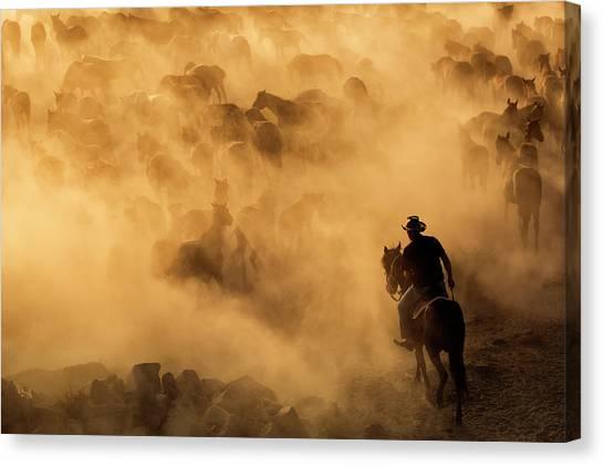 Boulder Canvas Print - Cappadocia Wild Horses by Dan Mirica
