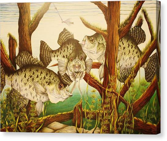 Prisma Colored Pencil Canvas Print - Captivating Crappies by Bruce Bley