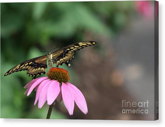 Captured Canvas Print