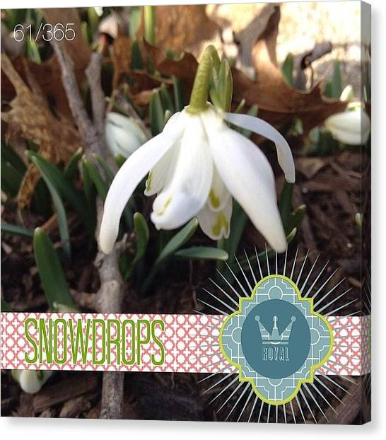 Storms Canvas Print - Captured This Snowdrop Blooming This by Teresa Mucha