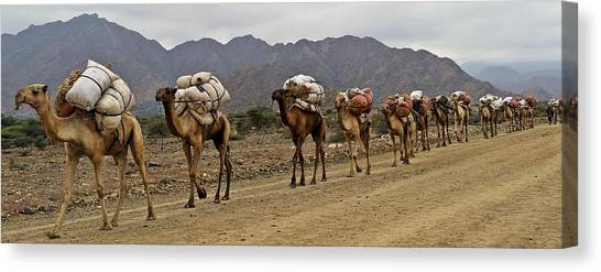 Caravan In The Desert Canvas Print by Liudmila Di