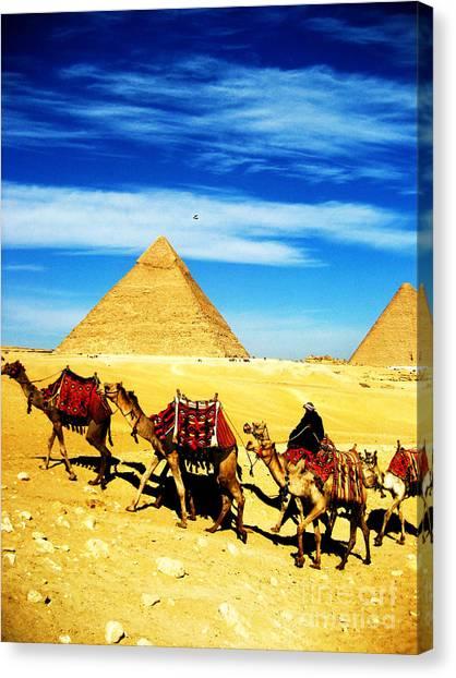 Caravan Of Camels 2 Canvas Print