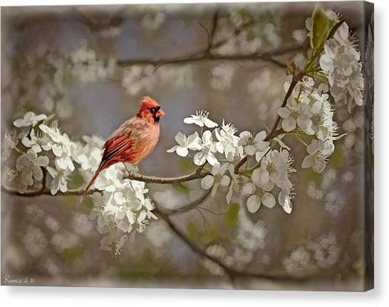 Cardinal And Blossoms Canvas Print