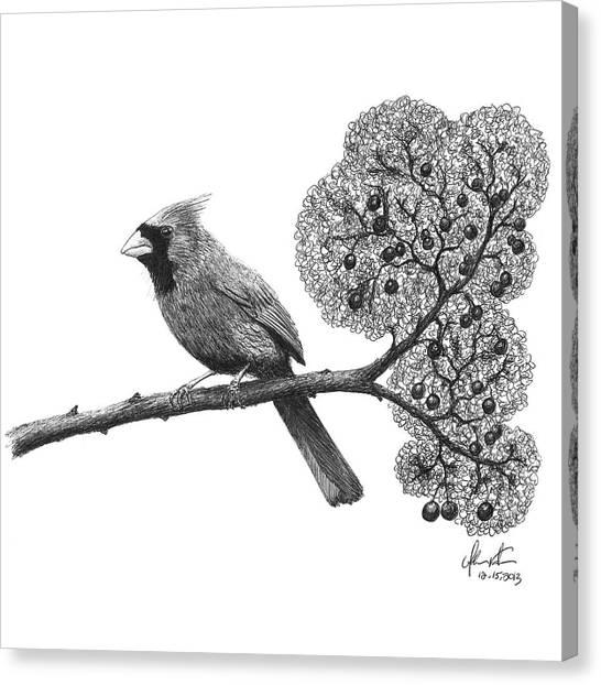 Ballpoint Pens Canvas Print - Cardinal Bird On Branch by Adam Vereecke