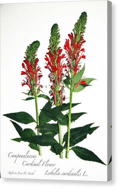 Cardinal-flower Canvas Print
