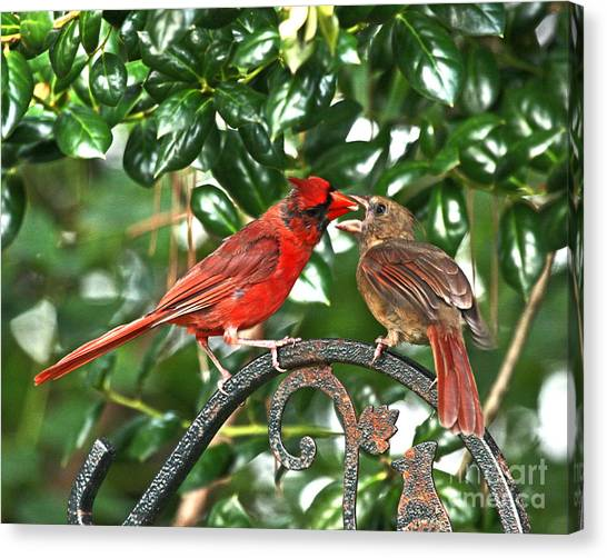Cardinal Gift Of Love Photo Canvas Print