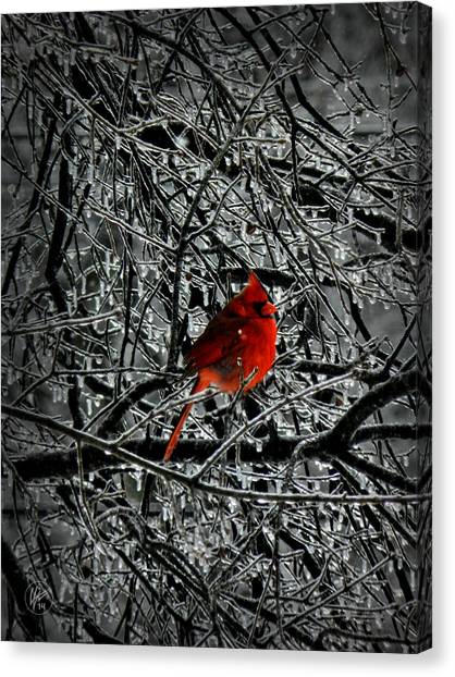 Cardinal In An Ice Storm 001 Canvas Print