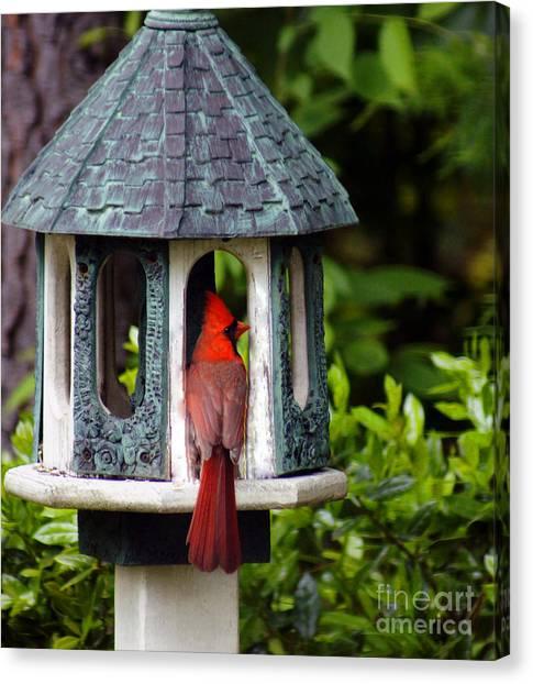 Cardinal In Bird Feeder Canvas Print