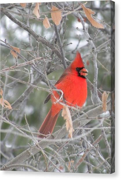 Cardinal In December Canvas Print