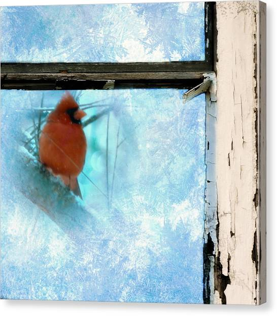 Windowpanes Canvas Print - Cardinal In The Frost by Jon Woodhams