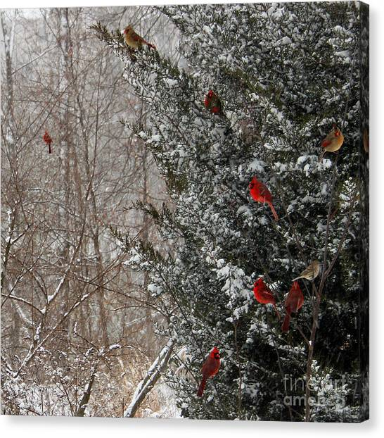 Cardinals In Winter 1 Square Canvas Print