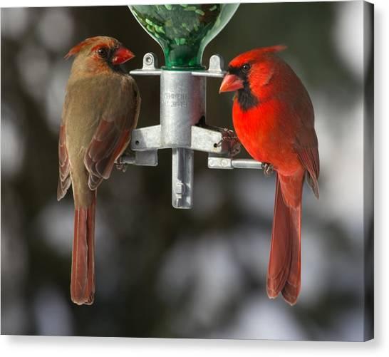 Cardinals Canvas Print by John Kunze