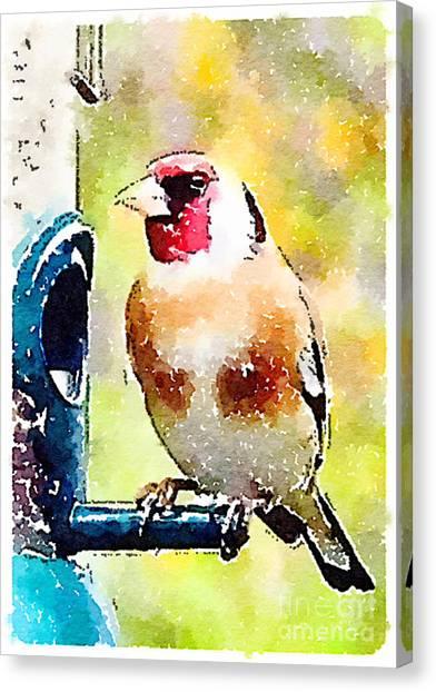 Carduelis Carduelis 'waterfinch' Canvas Print
