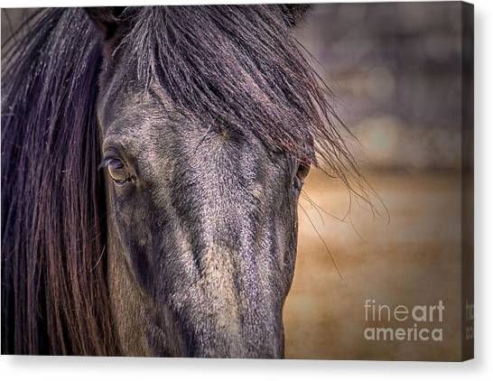 Care For Me Canvas Print