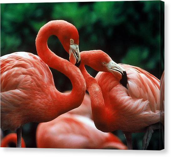 Wanna Hang Out Tonight Pinky? Canvas Print