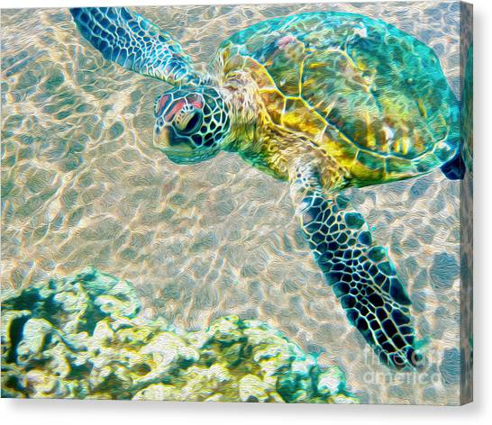 Starfish Canvas Print - Beautiful Sea Turtle by Jon Neidert