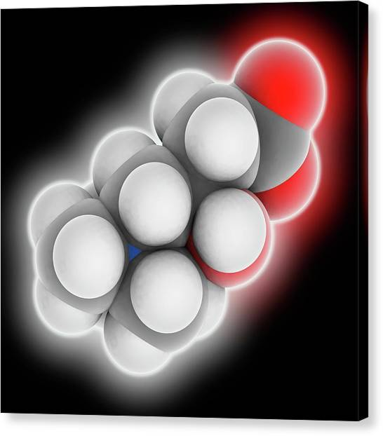 Carnitine Molecule Canvas Print by Laguna Design