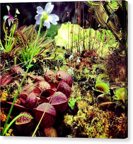 Carniverous Plants Canvas Print
