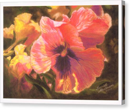 Caroline's Pansies Canvas Print