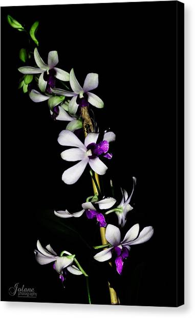 Carol's Orchid Canvas Print