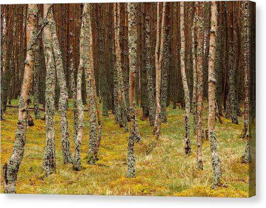 Carpeted Forest Canvas Print