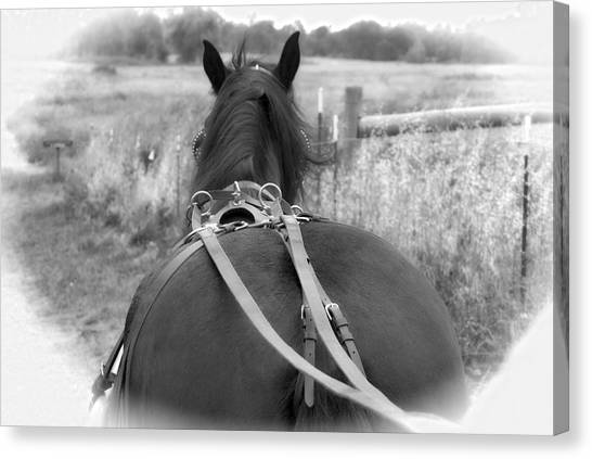 Canvas Print featuring the photograph Carraige View Horse by William Havle