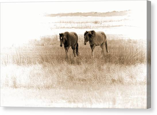 Carrot Island Ponies Canvas Print