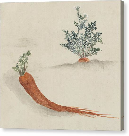 Carrots Canvas Print - Carrots by Aged Pixel