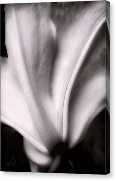 Casa Blanca Lily In Black And White Canvas Print