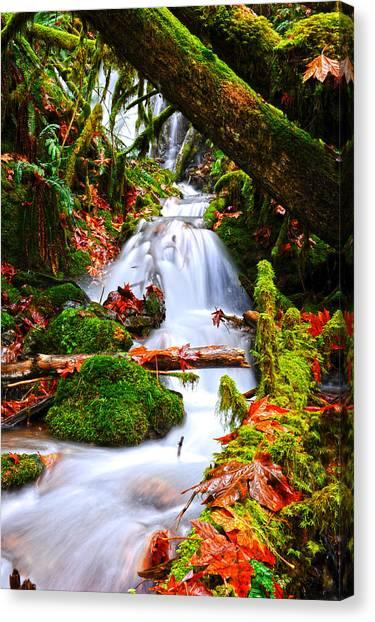 Randy Moss Canvas Print - Cascade Creek by Randy Giesbrecht