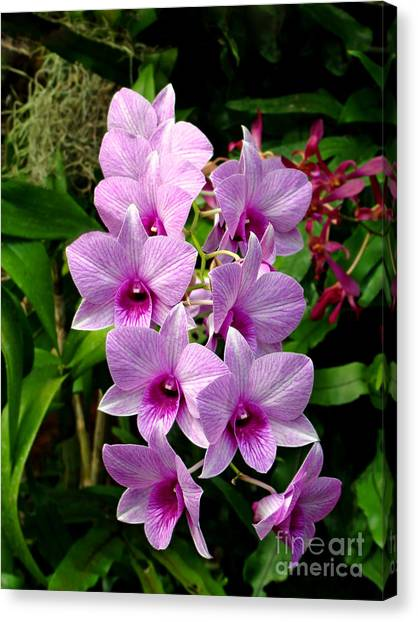 Cascading Lilac Orchids Canvas Print