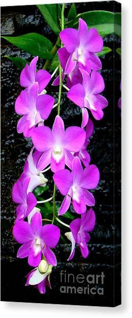 Cascading Orchids Canvas Print