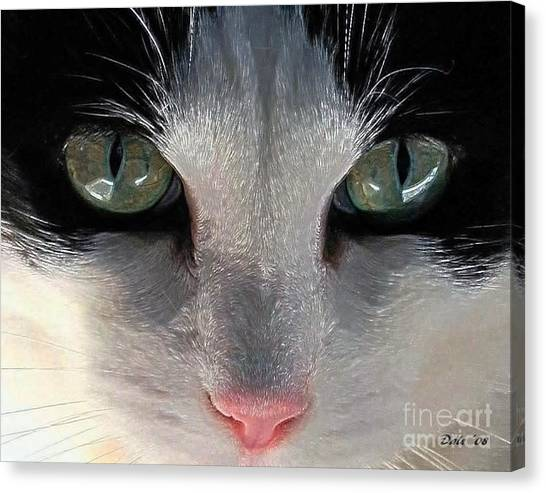 Casey Eyes Canvas Print