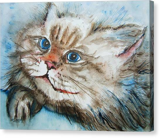 Himalayan Cats Canvas Print - Casey The Family Cat by Elaine Duras