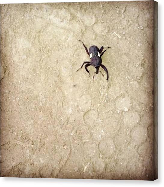Grasshoppers Canvas Print - Casi Lo Piso by Jose Luis Morales
