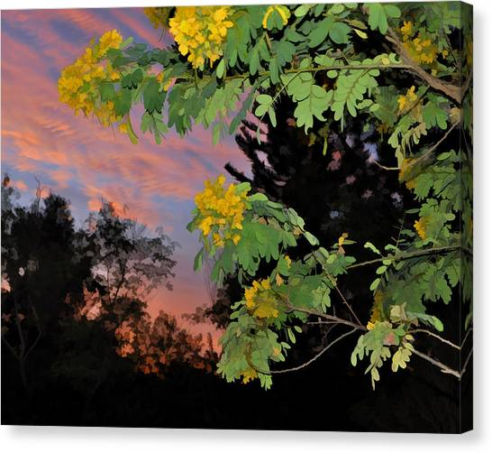 Casia Sunrise Canvas Print