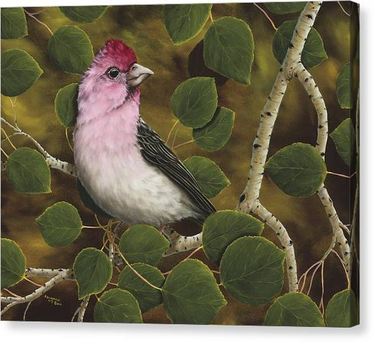 Finch Canvas Print - Cassins Finch by Rick Bainbridge