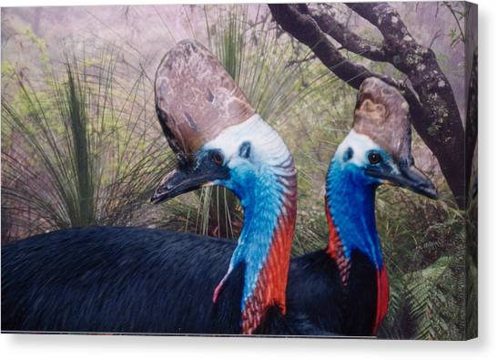 Cassowaries At Home Canvas Print