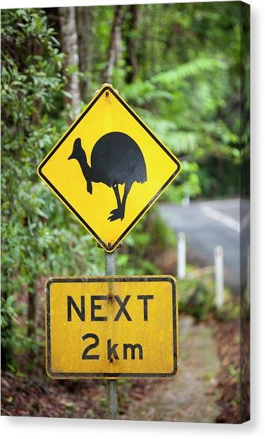 Daintree Rainforest Canvas Print - Cassowary Warning Sign by Ashley Cooper