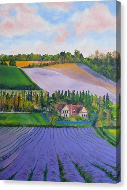 Castle Farm Shoreham Kent Lavender Fields England Canvas Print