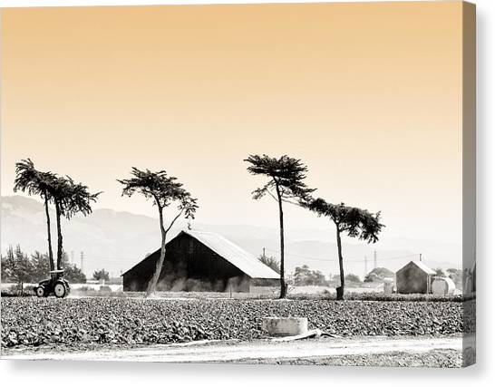 Castroville Farming Canvas Print