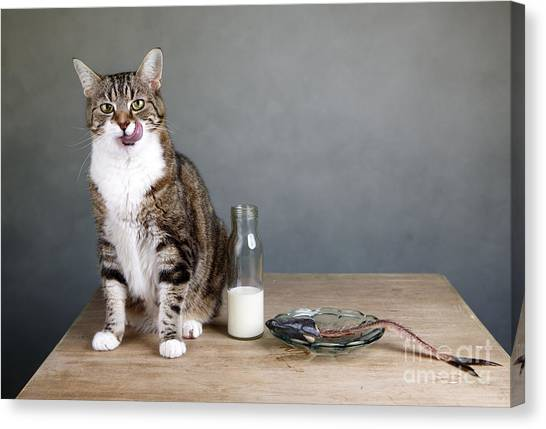 Bones Canvas Print - Cat And Herring by Nailia Schwarz