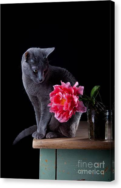 Russian Canvas Print - Cat And Tulip by Nailia Schwarz