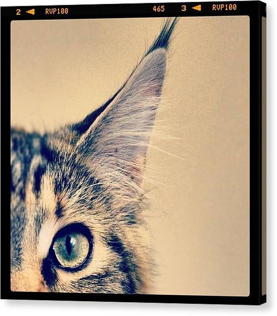 Head Canvas Print - #cat #animal #cute #adorable #kitten by Jill Battaglia